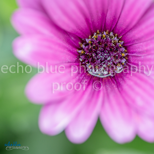 pink flower stock